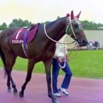 【競馬】伝説となった93年の第38回有馬記念。そのレースに出走した馬が二頭も存命中なのは凄いことだ…