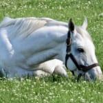 【競馬】一番の謎だけど競走馬の人工授精は出来ないの?技術的に可能な気がするけど