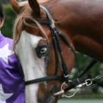 【競馬】金髪碧眼ハイソックス、魚目の競走馬チェリーソウマがカッコイイ