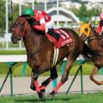 【ウマ娘】競走馬ウオッカのことが大好き過ぎて写真を貼っていたレッドディザイア