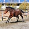 【祝】ハルウララが馬生初勝利!ソフト競馬「そふと女子会」