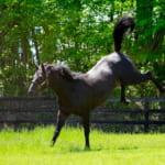 【競馬】胸がときめくようなカッコいい馬!イケメン馬は何度見ても見惚れてしまう…