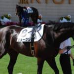 【競馬】一番体重が重い馬って?その名は「ショーグン」