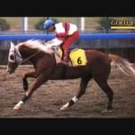 【競馬】世にも珍しい尾花栗毛を持つ美しい競走馬たち