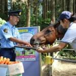 【競馬】ハルウララが交通安全ポスターに!「一生クルマに当たらないで」