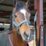 【競馬】マッシュルームは馬のおかげでウマいって知ってた?