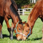 【競馬】競走馬同士の恋愛エピソードまとめ。ラブストーリーは突然に