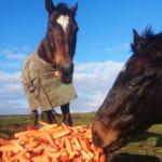 【競馬】馬は草食動物だけどモノを噛む力も強いのだろうか?