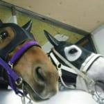 【競馬】競走馬同士の友情。仲良しショットがカワエエ
