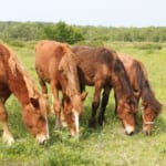【競馬】エサ・食事はどのくらい競走馬に影響を与えてるんだろう?