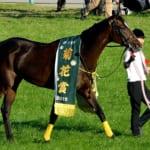 【競馬】菊花賞が10月21日開催。最も強い馬が勝つレース!
