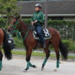 【競馬】ウオッカ産駒の馬名「タニノミッション」に決定。ゲート試験一発合格!