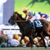 【競馬】可愛すぎる競走馬たちのほっこりエピソード