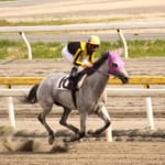 【競馬】メイプルキュートが114戦0勝でハルウララの連敗記録を更新
