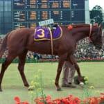 【ウマ娘】優しい世界で平和に暮らす引退馬たち