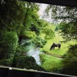 愛蔵版写真集「ウオッカinアイルランド」発売!まるで絵画の美しさ
