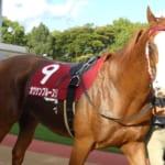 【競馬】トレーナーのみんなは好きな馬の毛色は何色かな?
