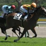 アマーティがレース後に倒れ馬運車で搬送、フェアリーステークス