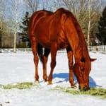 【競馬】デジタル、グラス、ゴルシ…雪景色の中の引退馬たちがカワエエ