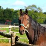 【競馬】馬の毛色は14種類、サラブレッドは8種類!みんなの好きな毛色は?