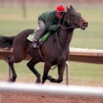 【競馬】アメリカ版ハルウララ・伝説の負け馬ジッピーチッピー