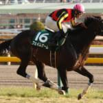 本日開催の重賞レースはダイヤモンドS&京都牝馬S!ヴィクトリアマイルへ向けた重要な一戦