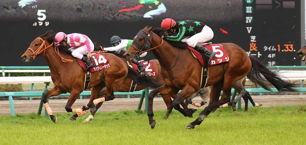 本日開催の重賞レースはニュージーランドトロフィー&阪神牝馬ステークス!