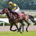 本日開催の重賞レースは京都新聞杯!