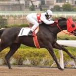 【競馬】藤田菜七子騎手が笠松競馬にヒマリチャンで初参戦決定!J交つくし賞