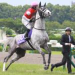 ゴルシ産駒のラシカルガイブが2歳新馬戦で本日デビュー!