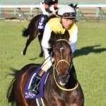 ニシノデイジーは神戸新聞杯から始動へ!秋も勝浦騎手とコンビ
