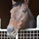 キングカメハメハが種牡馬を引退、社台スタリオンステーションで功労馬に