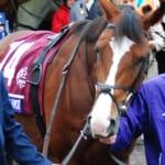 【競馬】日本には字数制限があるけど10文字以上の馬名で好きな競走馬は?