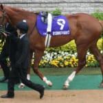 【競馬】引退馬協会がディープスカイの受け入れを決定!穏やかに過ごしてほしい…