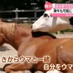 【競馬】自分を馬だと思ってる牛がいる!?歩き方がウマとそっくりで環境が与える影響って大きい