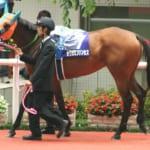 【競馬】カワカミプリンセスは親のキングヘイローと同様に気性難だけど遺伝してしまう?