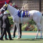 【競馬】ソダシの馬体が去年と比べるとムキムキに!?これは…