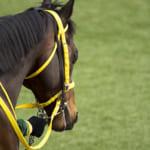 【競馬】馬名にしても違和感が無いスポーツ用語