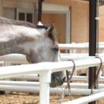 【競馬】競走馬も人と同じく定年とか存在するのだろうか?